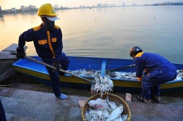Lực lượng chức năng tiến hành vớt cá nổi trên hồ.