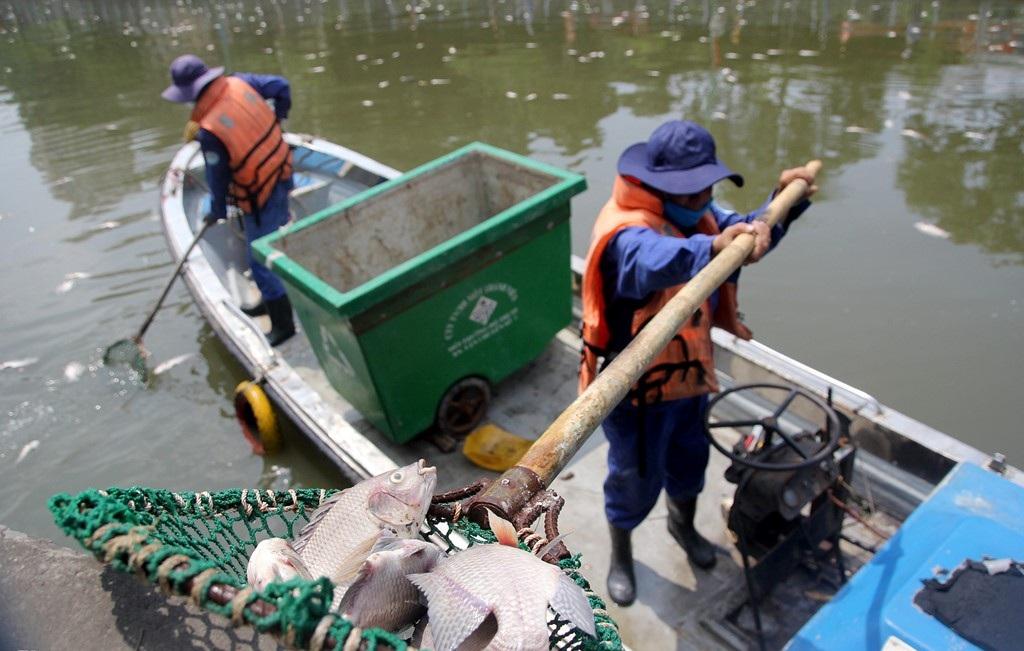 Công nhân Công ty Môi trường đô thị TP tiến hành vớt cá chết. Một công nhân cho biết, do số cá chết quá nhiều nên đến trưa vẫn chưa thể dọn sạch được dòng kênh.