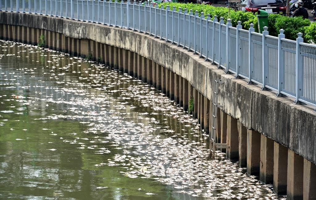 Sáng 17/5, người dân sống 2 bên kênh Nhiêu Lộc - Thị Nghè bất ngờ khi thấy cá chết hàng loạt, nổi lềnh bềnh khắp kênh.