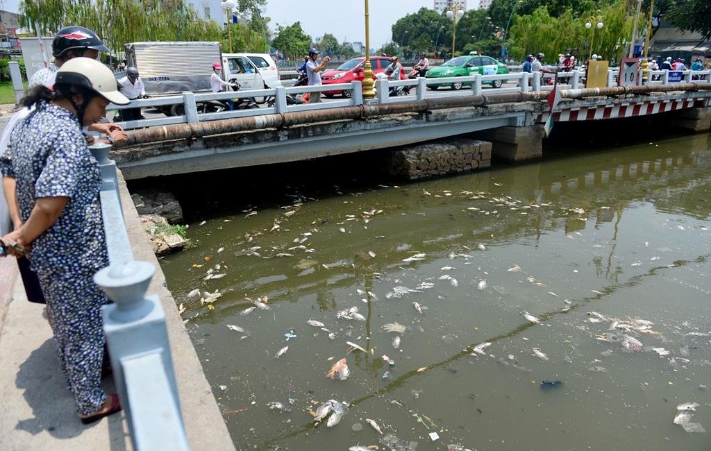 Cá chết tập trung từ đoạn cầu số 6 đến cầu Công Lý thuộc địa bàn các quận 3, Tân Bình, Phú Nhuận.