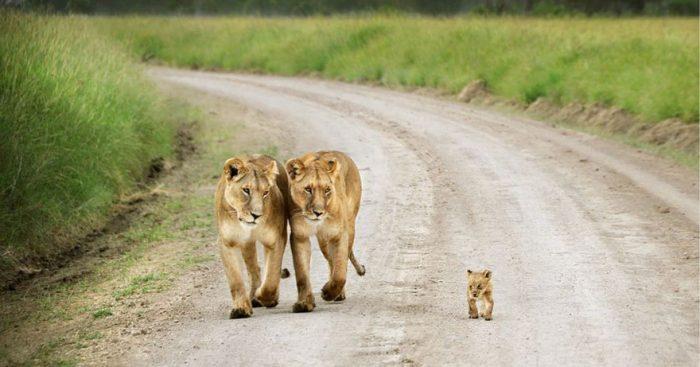 Niềm hạnh phúc trong thế giới động vật - H5
