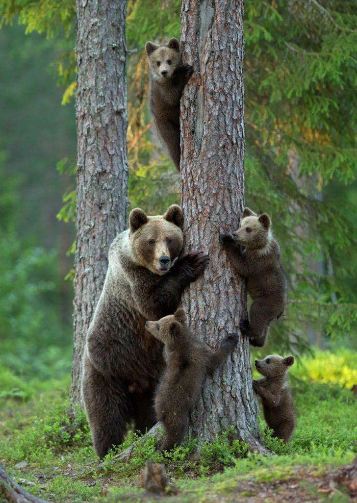 Niềm hạnh phúc trong thế giới động vật - H6