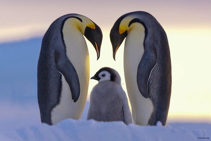 Niềm hạnh phúc trong thế giới động vật - H1