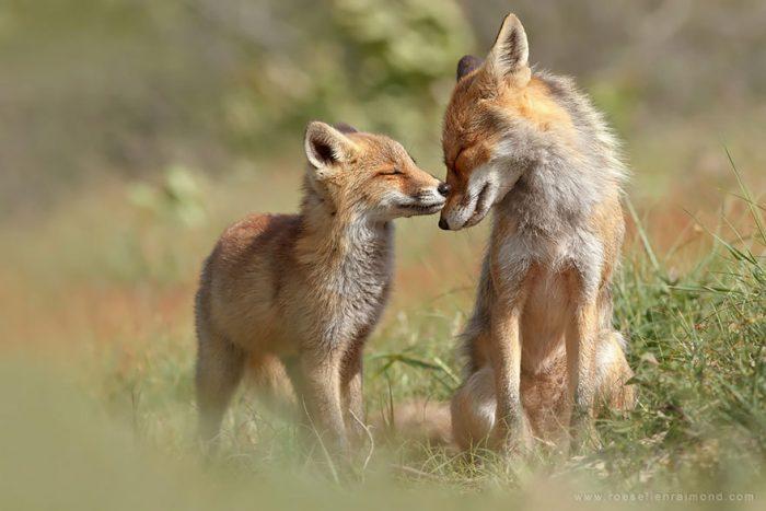 Niềm hạnh phúc trong thế giới động vật - H2