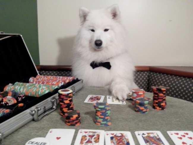 """Chết cười với 15 chú chó """"sành điệu"""" giống hệt người.6"""