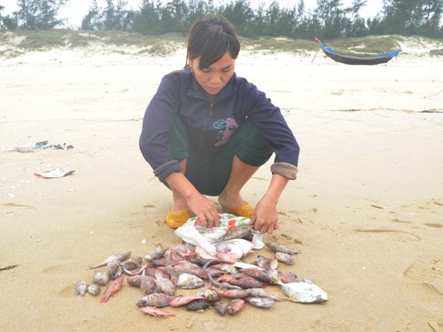 Cá chết dạt đầy các bãi biển miền Trung.