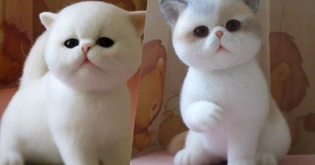 Nhìn qua không ai nghĩ đây là một chú mèo bông.