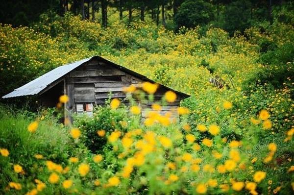 Những điểm chụp ảnh với cảnh đẹp như mơ ở miền Nam.5