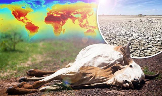 dead-cows-584798