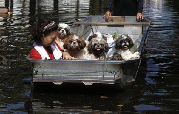 Bà chủ cùng đàn chó nhỏ được đội cứu hộ đưa đến nơi an toàn.