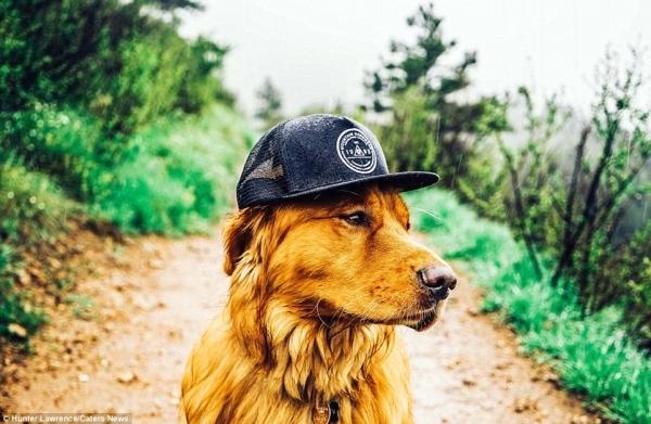 Aspen là chú chó rất ngoan và nghe lời chủ. Chú sẵn sàng đội mũ, mặc áo và tạo dáng cực chuyên nghiệp trong những shoot hình.