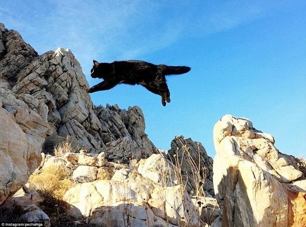 Cô mèo Millie thích leo núi.
