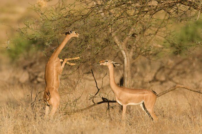 Những loài động vật có khả năng siêu phàm khó tin.3
