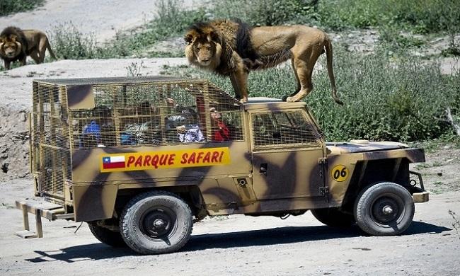 vườn thú nhốt du khách để thú dữ quây,