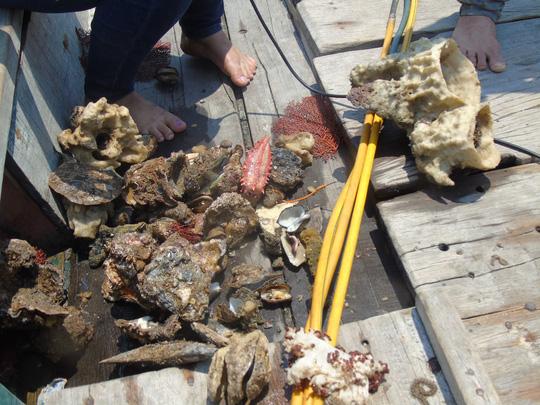 Các thợ lặn phát hiện hàu, vẹm, hải sâm... chết nhiều dưới đáy biển Quảng Bình, đang trong quá trình phân hủy .