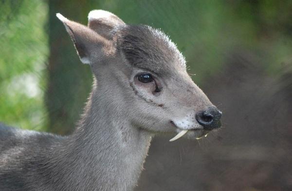 Những loài động vật có khả năng siêu phàm khó tin.4