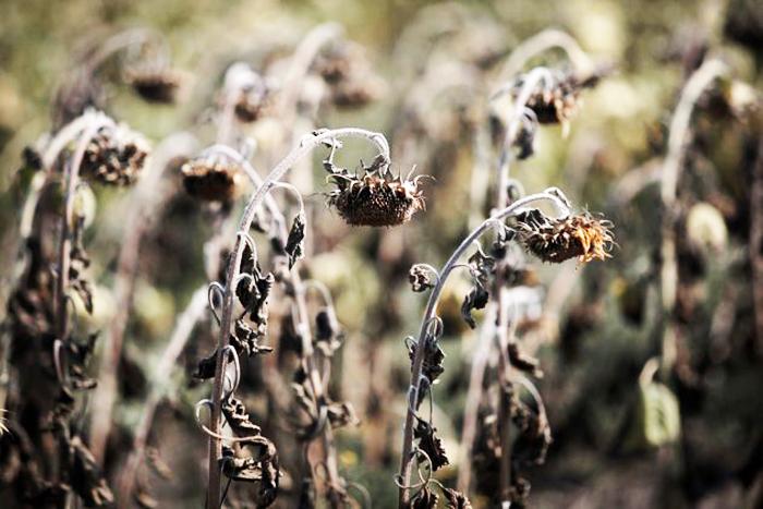 Cây cối trong nhà chết không rõ nguyên nhân thì không thể không lưu ý. (Ảnh: Billmoyers)