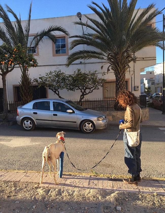 Chó mẹ gãy chân lết hơn 3km tìm người chăm sóc đàn con.6