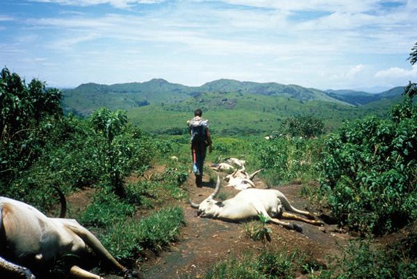 Không những người, cả gia súc cũng chết như rạ bởi làn sương độc