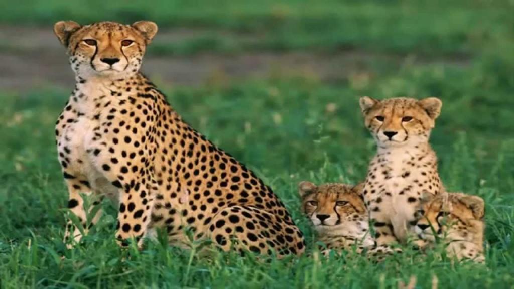 Thời thơ ấu đáng yêu của những động vật săn mồi.3