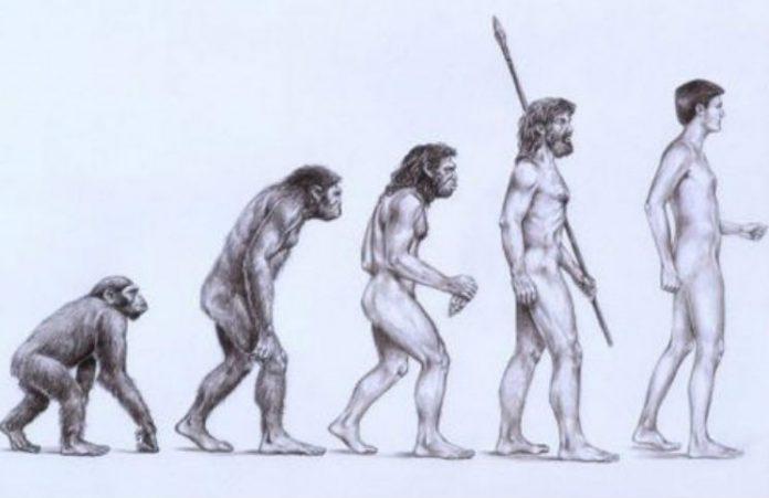 Con người không thể tiến hóa từ vượn theo như học thuyết của Darwin.