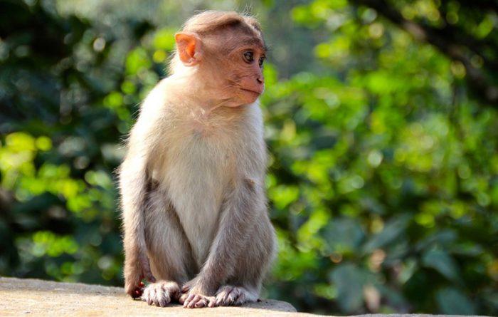 monkey-1028659_960_720