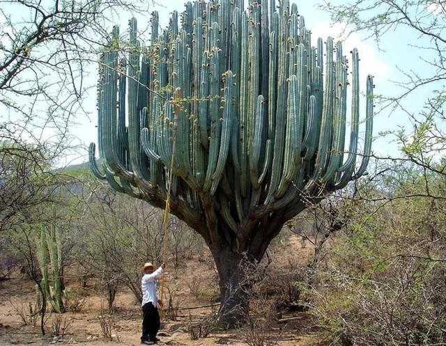Nếu có thể, hãy cho tôi làm nhà ở trên cái cây này.