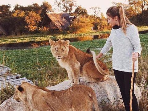 Daniela Moreno đang chăm sóc một con sư tử ở Châu Phi hồi đầu năm nay.