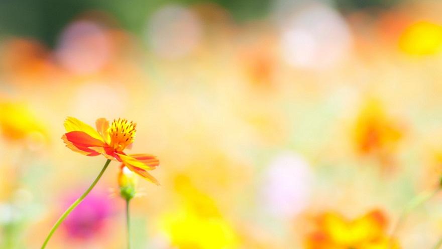 """Khi có thể dũng cảm bước qua khỏi những e dè, định kiến tạo nên bởi vẻ bề ngoài, bạn sẽ thấy dường như mình đã bước ra khỏi mùa đông giá rét của sự thờ ơ, để đắm mình trong sự ấm áp của mùa xuân, sự ấm áp mang tên """"chia sẻ""""."""