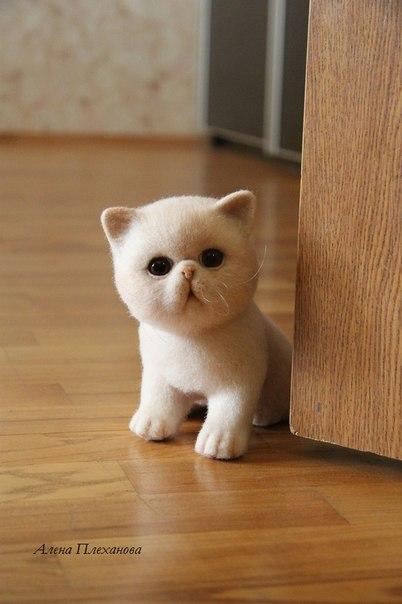 Những cử chỉ đáng yêu như những chú mèo thật