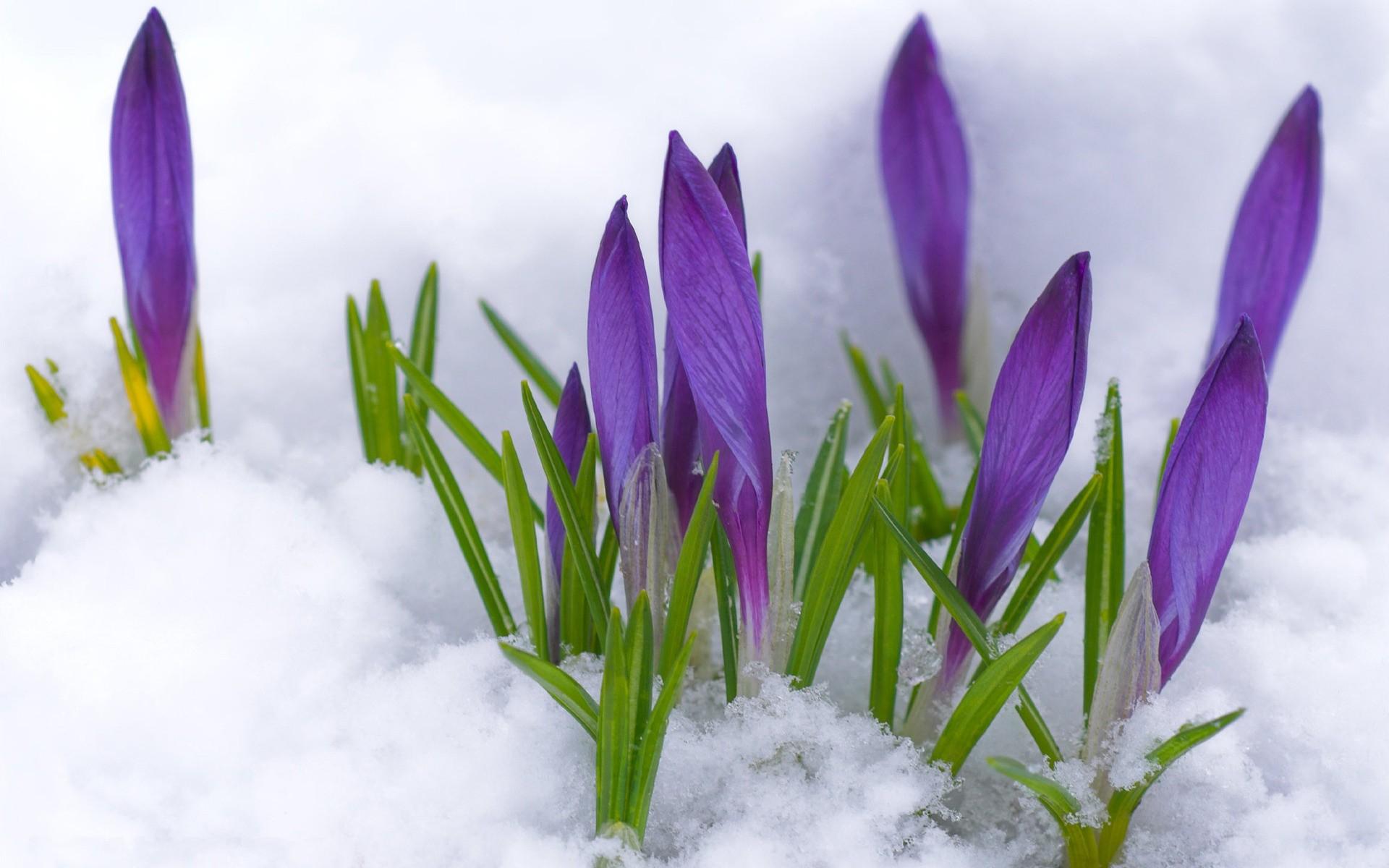 snow-flowers_00393425