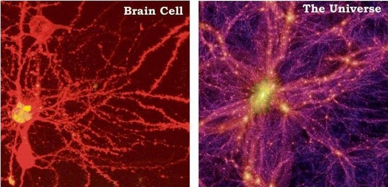 Sự tương đồng đáng kinh ngạc giữa tế bào não (trái) và vũ trụ (phải). (Ảnh qua estatevaults.com)