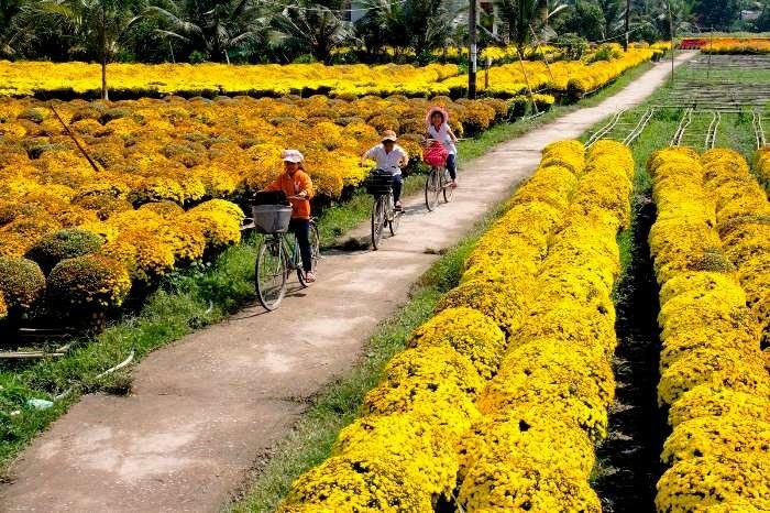 Du xuân dọc 3 miền đất nước ngắm muôn hoa khai nở. 1