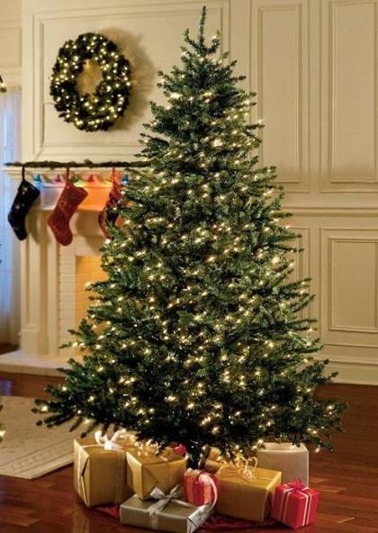 Truyền thuyết về các loài cây trang trí mùa Giáng Sinh - Cây Giáng sinh