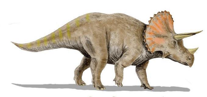Chiếc tù và chứng minh loài người từng cưỡi khủng long 33.500 năm trước? - ảnh 2