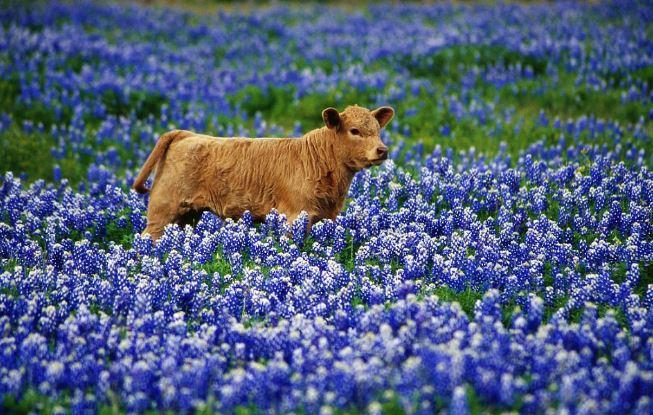 Mãn nhãn với những cánh đồng hoa đẹp nhất thế giới - H13
