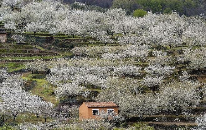 Mãn nhãn với những cánh đồng hoa đẹp nhất thế giới - H5