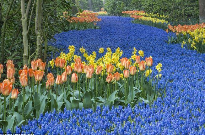Mãn nhãn với những cánh đồng hoa đẹp nhất thế giới - H1