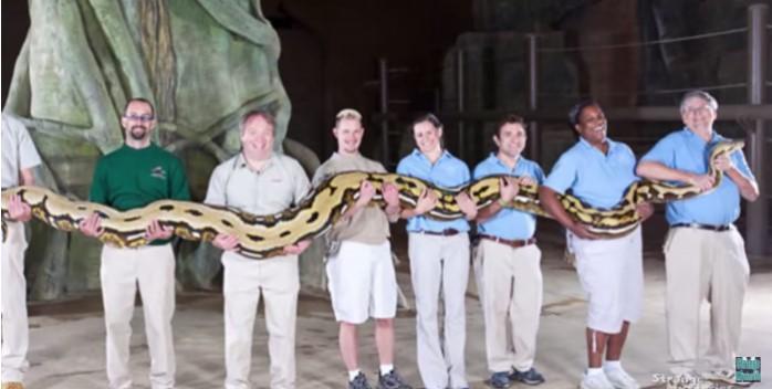 Đại tá không quân Mỹ từng gặp loài rắn khổng lồ có thể dài đến 60 mét..2