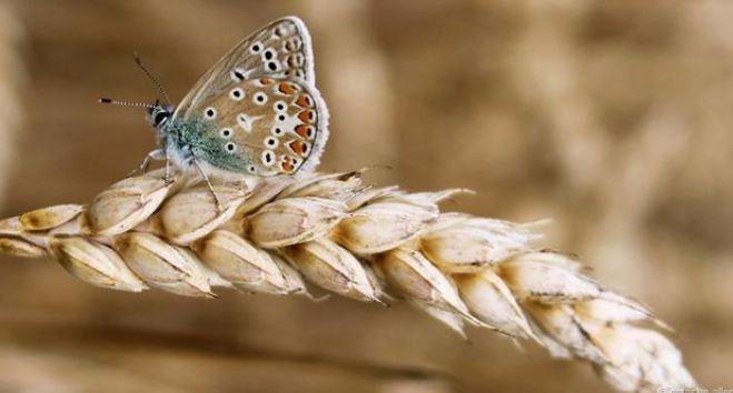 Hình ảnh tuyệt đẹp của những sinh vật nhỏ bé - h1