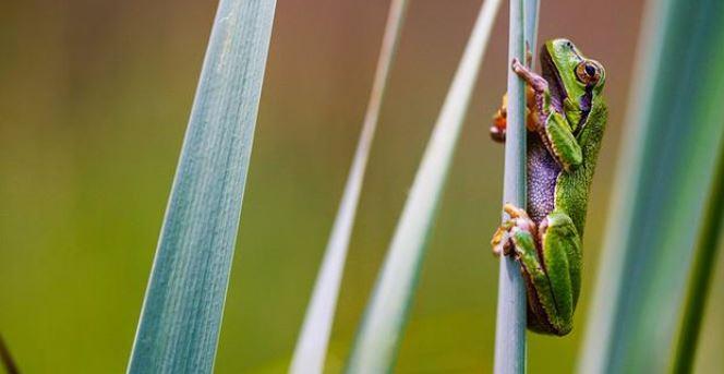 Hình ảnh tuyệt đẹp của những sinh vật nhỏ bé - h5