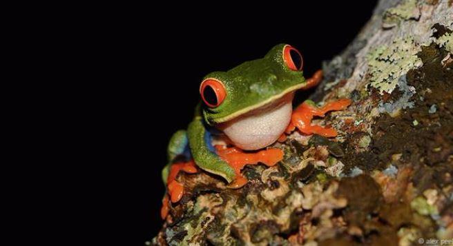 Hình ảnh tuyệt đẹp của những sinh vật nhỏ bé - h6