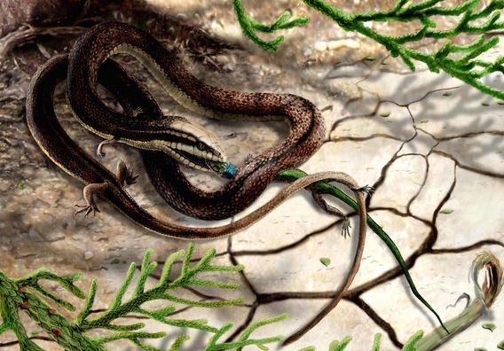 Hoảng hồn với rắn bốn chân từ kỷ Phấn trắng - H5