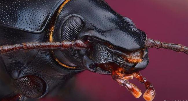 Hình ảnh tuyệt đẹp của những sinh vật nhỏ bé - h9