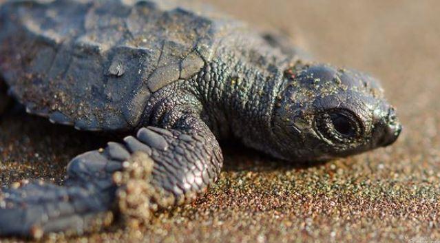 Hình ảnh tuyệt đẹp của những sinh vật nhỏ bé - h11
