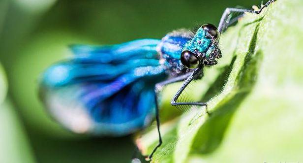 Hình ảnh tuyệt đẹp của những sinh vật nhỏ bé - h7