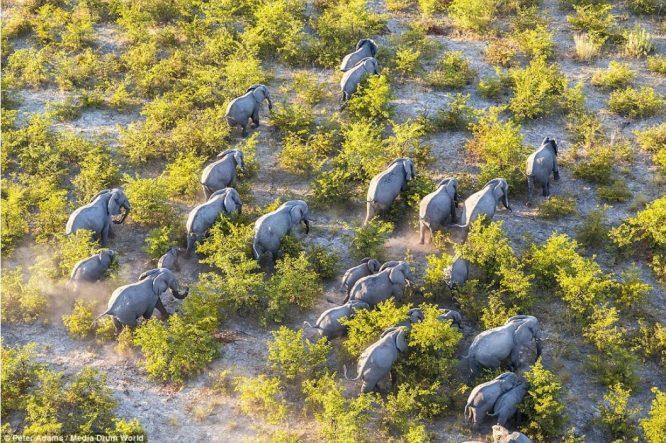 Thế giới động vật đẹp mê hồn nhìn từ trên cao.9