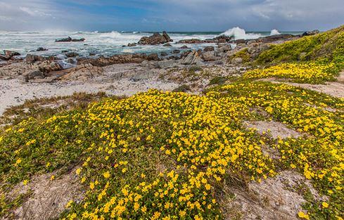 Ghé thăm xứ sở hoa thần kỳ trên hoang mạc Nam Phi - H1