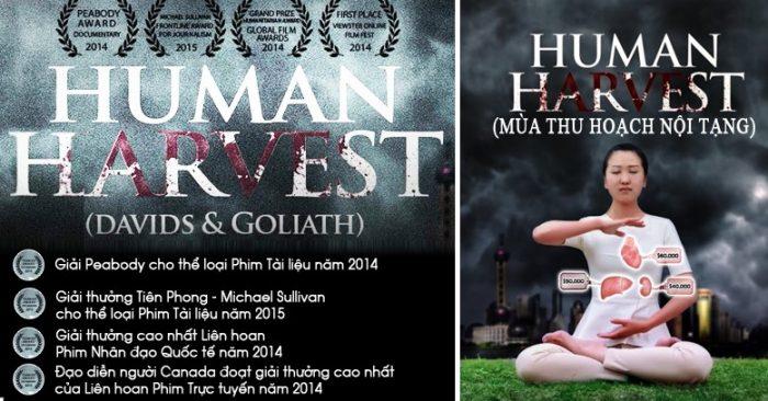 Phim tài liệu 'Mổ cướp nội tạng sống' nhận giải thưởng lớn quốc tế và được công chiếu tại Quốc hội Anh - H1
