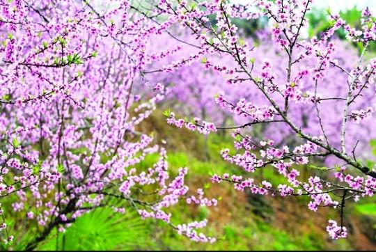Du xuân dọc 3 miền đất nước ngắm muôn hoa khai nở.20